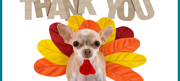 Dog wearing turkey costume with a banner above that says, 'thank you.'